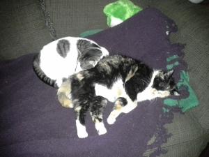Snoops and Kommando Sleeping_05292015