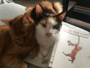 chloe-and-charlie-save-the-cat
