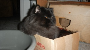 dougy-loves-boxes