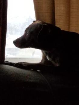 dog-tv