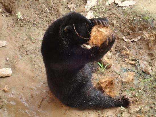 Image result for bears eating honey