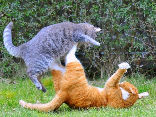 Image result for cats fighting