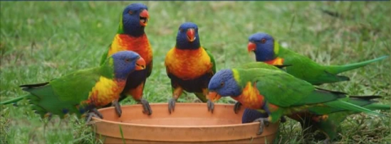 Image result for group of parrots