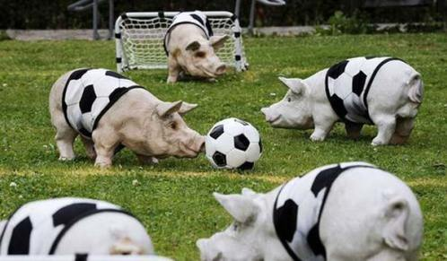 Image result for animals playing soccer
