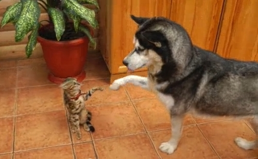 Image result for cat chasing dog