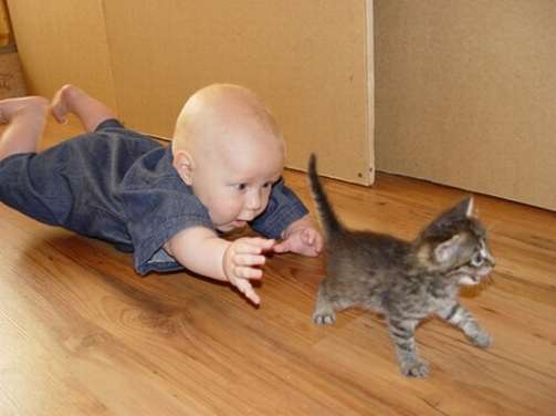 Image result for children chasing cats