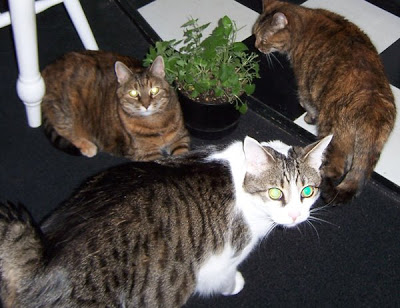 Image result for catnip party