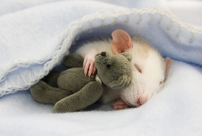 Image result for mouse in a house