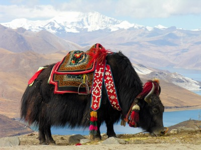 Image result for christmas yak