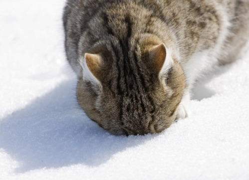 Image result for animals in snow