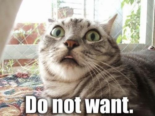 Image result for cat rejection meme