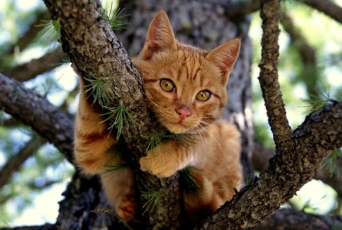 Image result for cats in tree