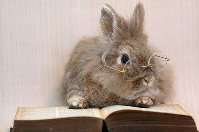 Image result for rabbit reading'