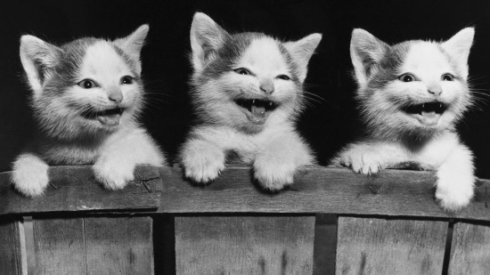 Image result for happy kittens""